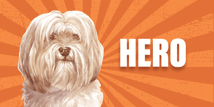 Coco the Support Dog Header